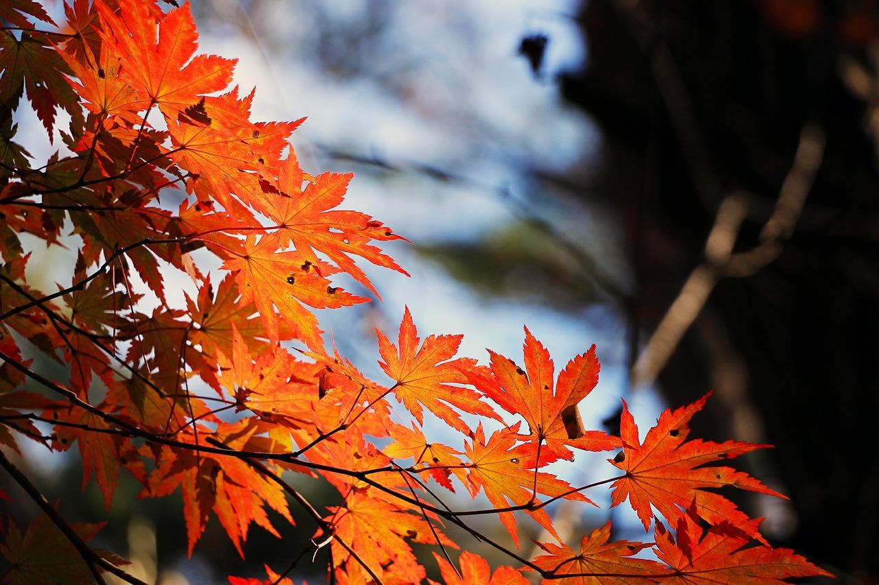 男の和服着物,メンズ着物,温泉,秋冬,和装,種類,狐面,日本,裏着物