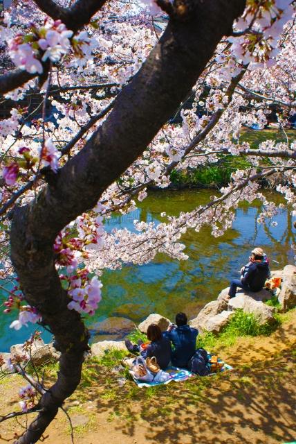 男の和服,モッズ,メンズ着物,和装,裏着物,和,文化,狐面,お花見,桜,日本,