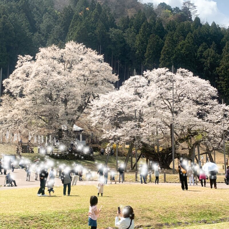 男の和服,メンズ着物,狐面,日本,裏着物,桜,淡墨桜